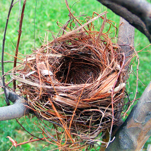 Still Adjusting to an Empty Nest?